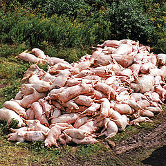 JKS A/S behandler ledige som svin